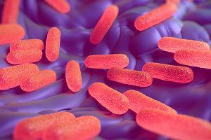 Salmonella opanowała żłobki i przedszkola. Prawie100 osóbtrafiło do szpitala