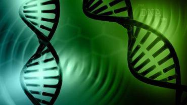 Mimo że kwasica metylomalanowa ma podłoże genetyczne, to o jej rozwoju decyduje jednoczesne przekazanie uszkodzonego genu przez oboje rodziców