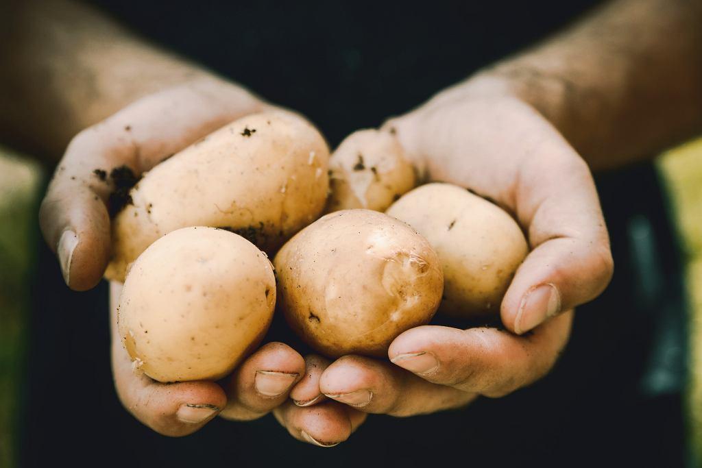 ziemniaki kaloryczność