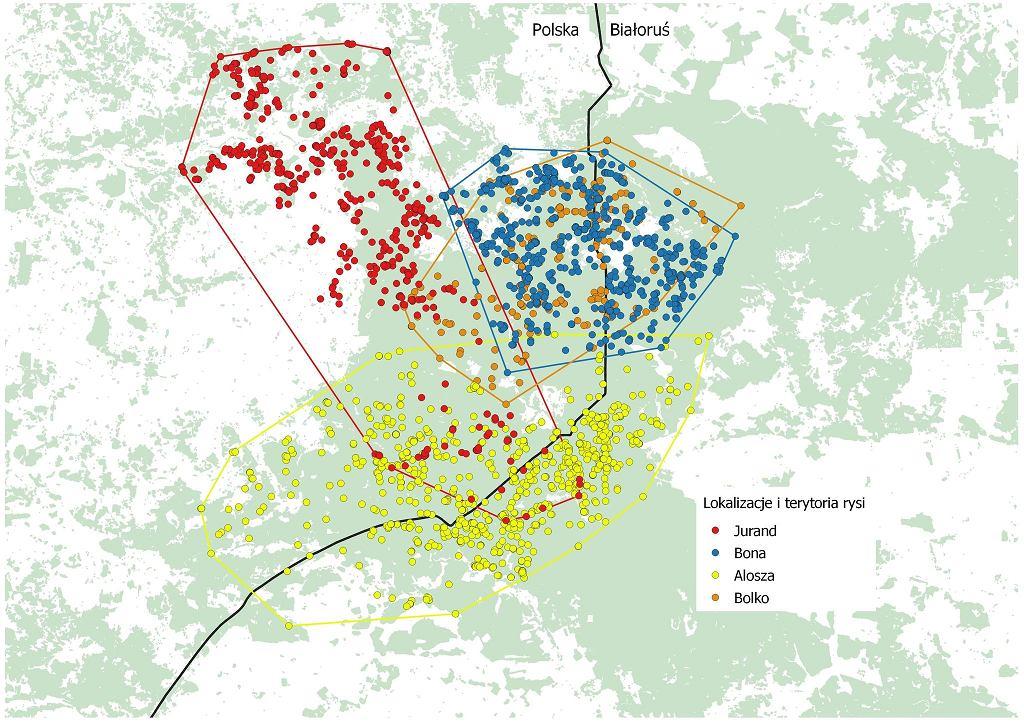 Lokalizacje i terytoria rysi zaopatrzonych w obroże GPS przez Instytutu Biologii Ssaków PAN w Białowieży. Odczyty z lat 2004-2011.