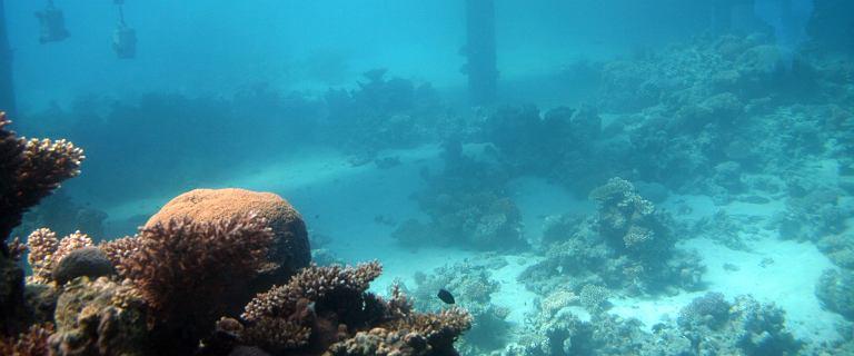 Polska chce szukać surowców na dnie oceanów. Ale pojawił się problem