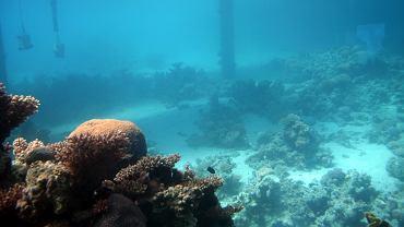 Dno oceanu. Polska ma ambitne plany wydobywania surowców