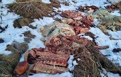 Porzucone sterty mięsa w okolicach Libiąża