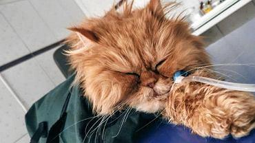 Kot Jadzia. Prokuratura sprawdza czy jego obrażenia to sprawka Patryka M.
