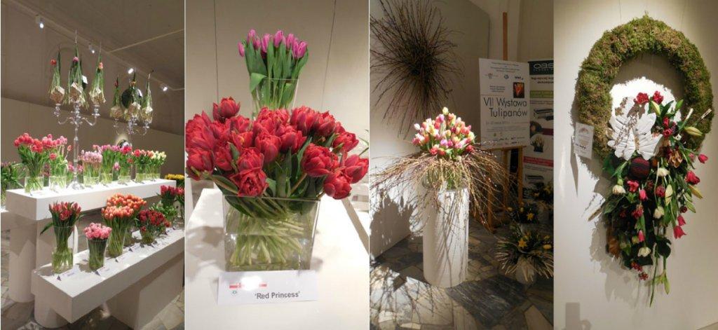 VIII Wystawa Tulipanów w Wilanowie