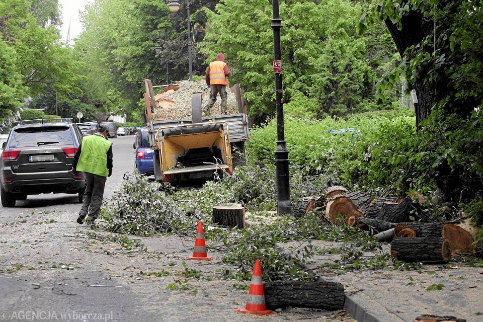 W Warszawie drewno wycięte przy ulicach oddaje się do 'utylizacji albo zagospodarowania we własnym zakresie' firmom, które wygrały przetarg