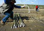 Miliardowe kary dla Polski za opóźnienia w OZE?