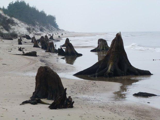 Zdjęcie numer 5 w galerii - Niezwykłe zdjęcia ze Słowińskiego Parku Narodowego. Morze odsłoniło prehistoryczny las