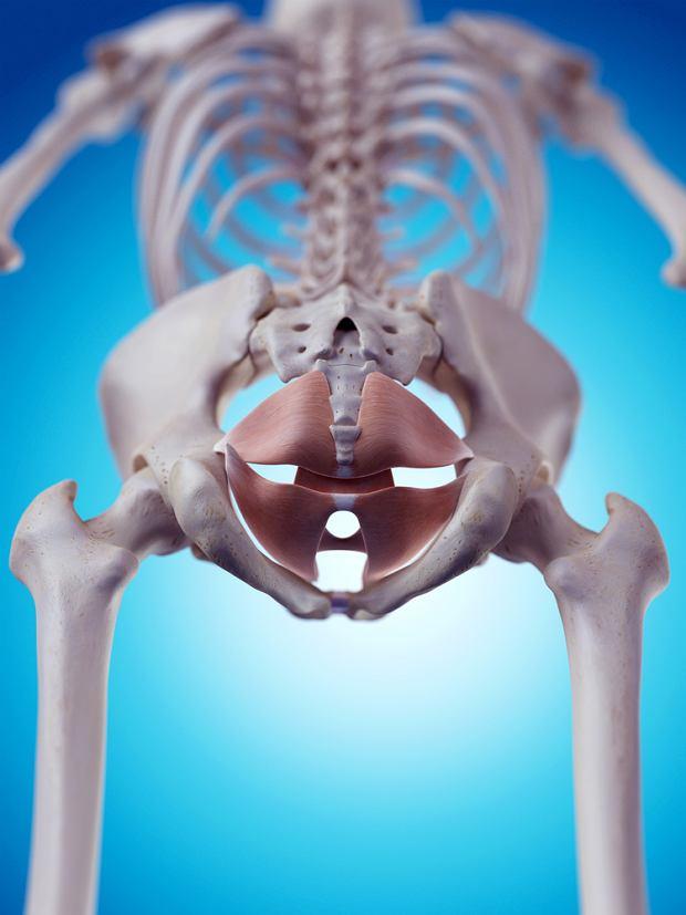 Gdzie znajdują się mięśnie dna miednicy?