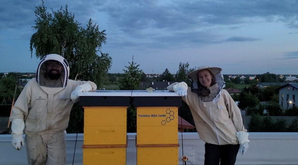 Pszczoły Ikea Janki
