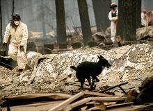Ofiar pożaru w Kalifornii mogą być setki. Amerykanie wciąż liczą zaginionych