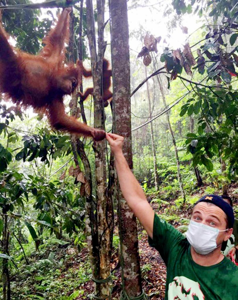 Leonardo DiCaprio odwiedza zagrożone orangutany na Sumatrze
