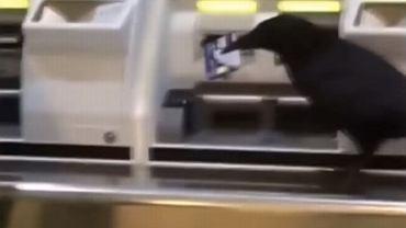 Kruk ukradł kartę i próbował kupić bilet