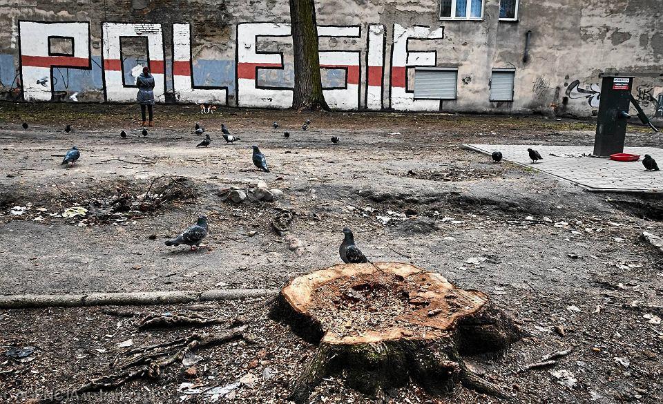 Wycięte drzewa przy Struga i Lipowej