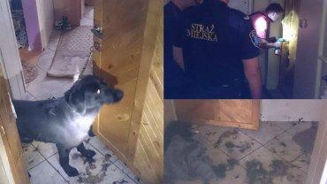 Właścicielka psa wyjechała na kilka dni. Zostawiła zwierzę przywiązane do klamki