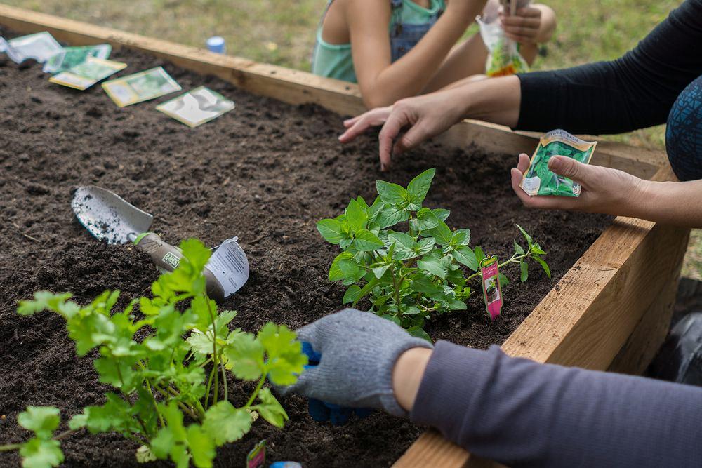 Ogród warzywny w skrzyniach. Zdjęcie ilustracyjne