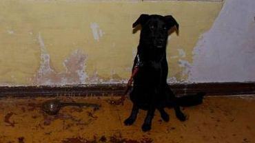 Pies znaleziony przez policjantów