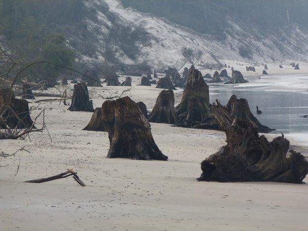 Zdjęcie numer 0 w galerii - Niezwykłe zdjęcia ze Słowińskiego Parku Narodowego. Morze odsłoniło prehistoryczny las