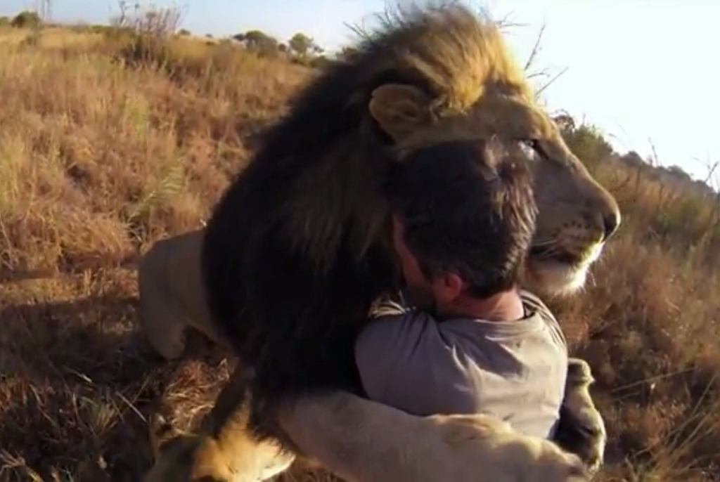Kadr z filmu 'Lions - The New Endangered Species?'