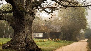 300-letni dąb 'Dunin' ( (niektórzy oceniają jego wiek nawet na 400 lat)) rośnie w pasie drogi prowadzącej z Przybudek do Podborowiska (gm. Narew)