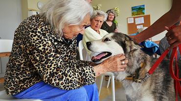 W początkowej fazie choroby, gdy pojawiają się objawy depresyjne, pies poprawia nastrój. U pacjentów zdanych już całkowicie na opiekę innych pies wyzwala czułość i troskę