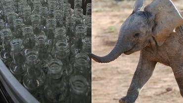 Wódka i słoń