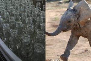 serwis randkowy z dziennikiem słoni