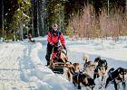 Mój pierwszy raz: psim zaprzęgiem za koło polarne