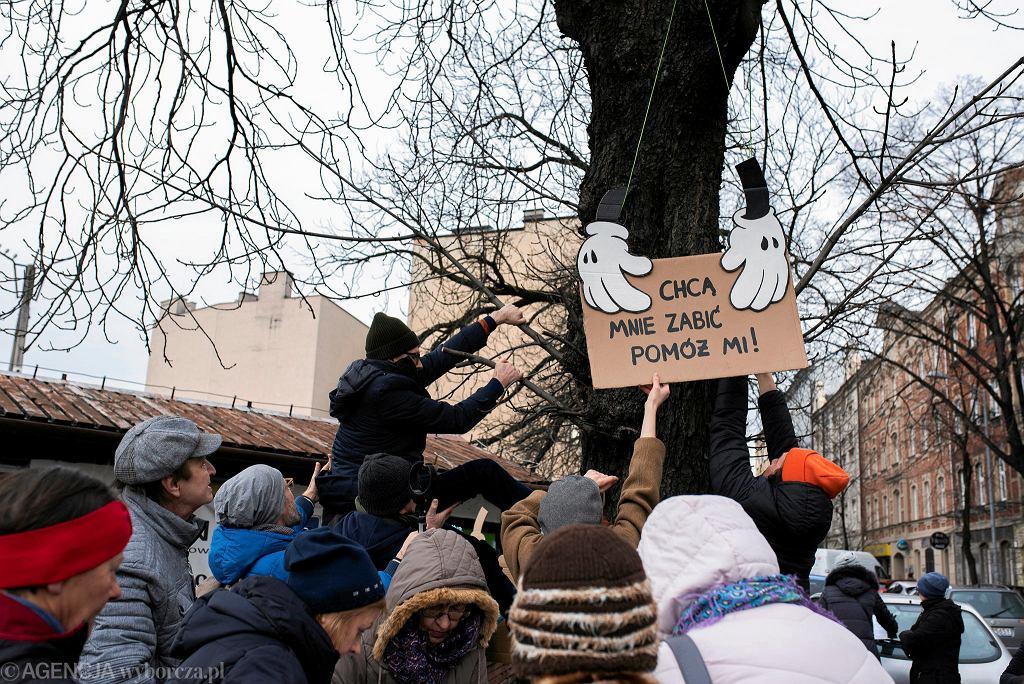 Luty 2020. Mieszkańcy Katowic zbierają podpisy pod petycją przeciwko wycince kasztanowców rosnących przy ul. Raciborskiej