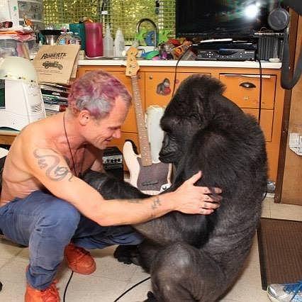 Flea i Koko