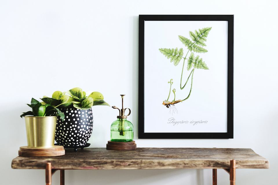 Plakat botaniczny z modnym wzorem paproci.