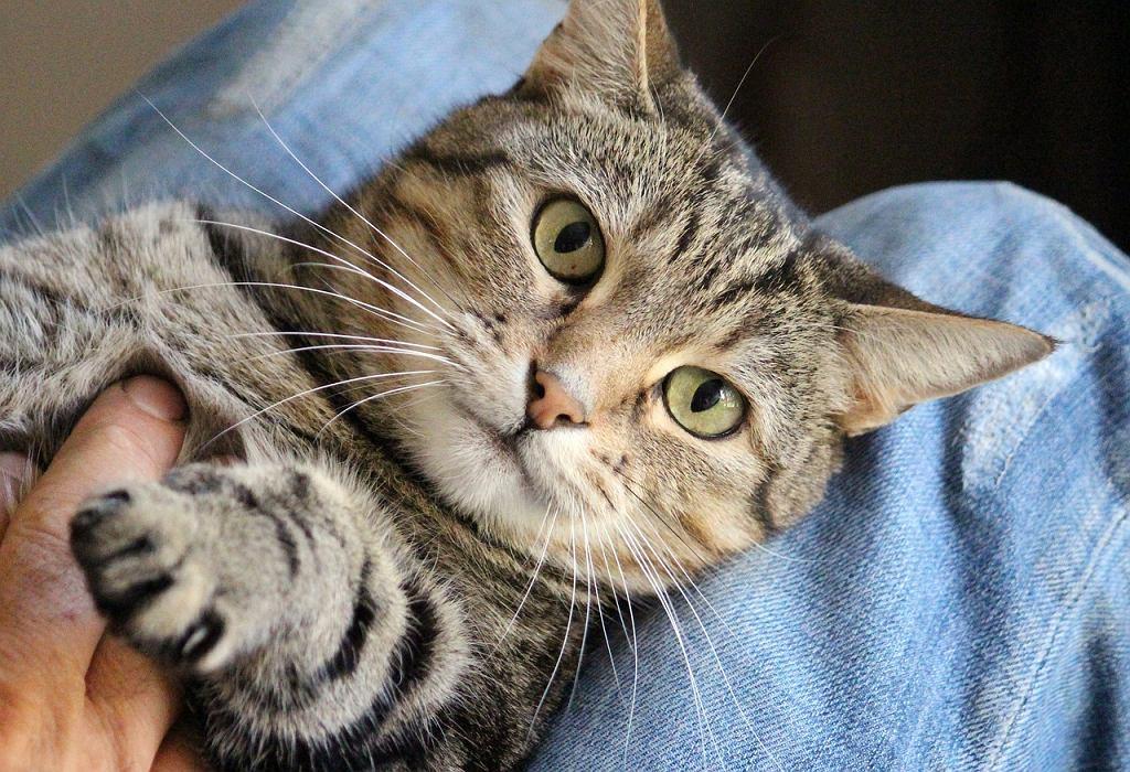 Głaskać cały dzień koty i jeszcze dostawać za to pieniądze? Brzmi jak praca idealna