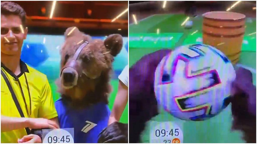 Niedźwiedź typuje mecze w rosyjskiej telewizji