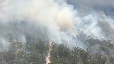 Australia. Pożar na Wyspie Fraser