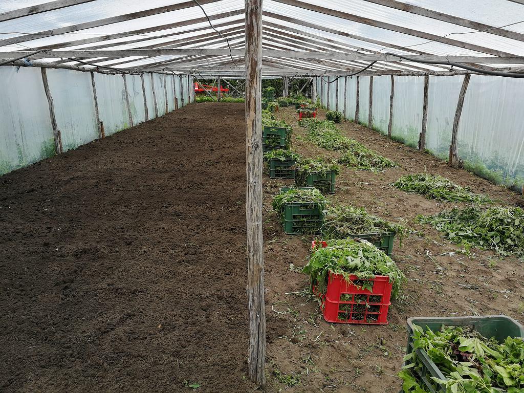 Czyszczenie tunelu z zieleniny