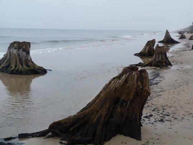 Zdjęcie numer 2 w galerii - Niezwykłe zdjęcia ze Słowińskiego Parku Narodowego. Morze odsłoniło prehistoryczny las
