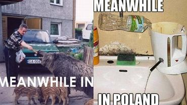 Tymczasem w Polsce.