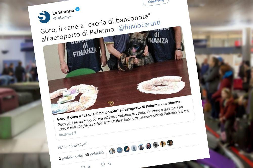 Pies Goro ma wyjątkowy talent. Na lotnisku w Palermo zapobiega przemytowi pieniędzy