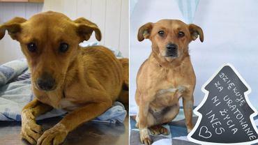 Inez przed i po adopcji