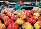 Dzielnie wcinamy jabłka. Ceny poszły w górę