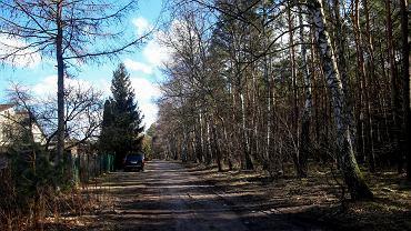 Las przy ul. Wiśniowej w Bydgoszczy