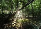 Nie musisz wyjeżdżać z Wrocławia, żeby pójść na spacer do lasu. Wystarczy bilet na autobus
