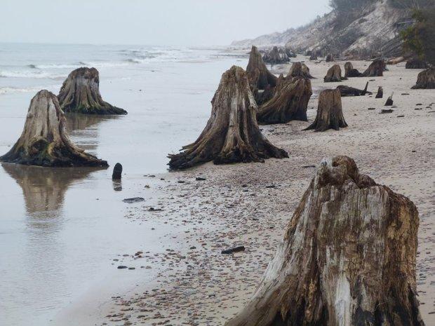 Zdjęcie numer 1 w galerii - Niezwykłe zdjęcia ze Słowińskiego Parku Narodowego. Morze odsłoniło prehistoryczny las