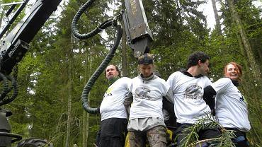 Blokada wycinki drzew w Puszczy Białowieskiej