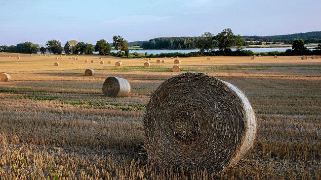 """""""Rolnik ma pięć hektarów. Nic na nich nie uprawia, ale raz w roku je przeorze i za to dostaje dopłaty z UE"""""""