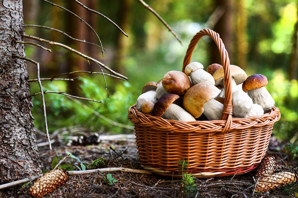 Czy grzyby są zdrowe? Mimo że, zawierają niewielkie ilości wartości odżywczych warto włączyć je do swojej diety. Zdjęcie ilustracyjne