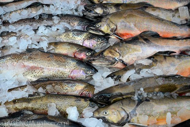 Brutalne prawdy o chodzeniu na ryby