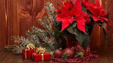 Gwiazda betlejemska jest jednym z symboli Świąt Bożego Narodzenia. Zdjęcie ilustracyjne