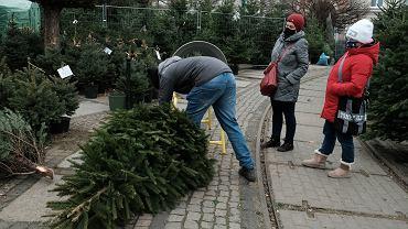 Choinka - jakie drzewko wybrać na święta Bożego Narodzenia?