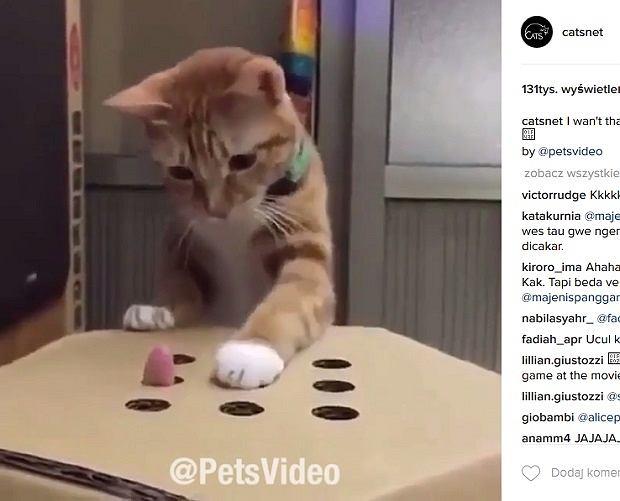 Ten kot was rozbawi do łez